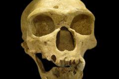 Neanderthal La Chapelle