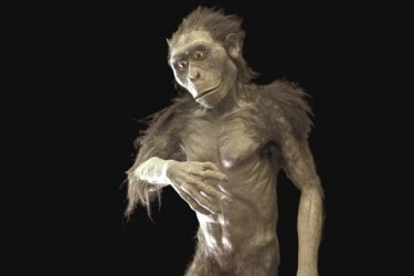 "Australopithecus ""Lucy"""