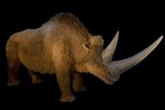 Rinoceronte lanoso