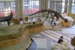 Area paleontologica