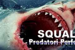 Sharks, perfect predators
