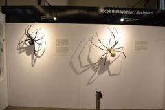 Arthropoda