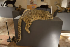 Felines Lethal elegance