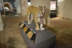 Leopard model with musculature