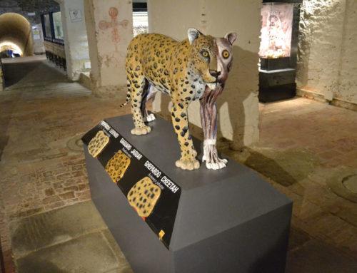 Modello di Leopardo con muscolatura